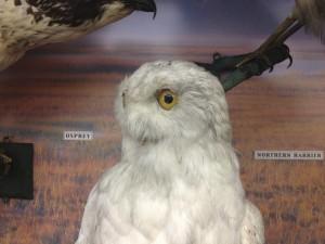 Historic Bird Collection 1